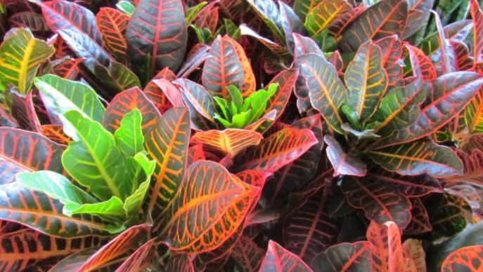 identificando espécies plantas