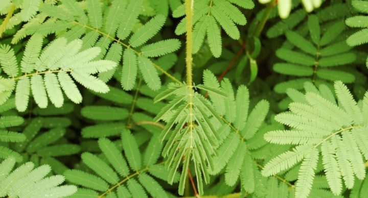 identificar as plantas