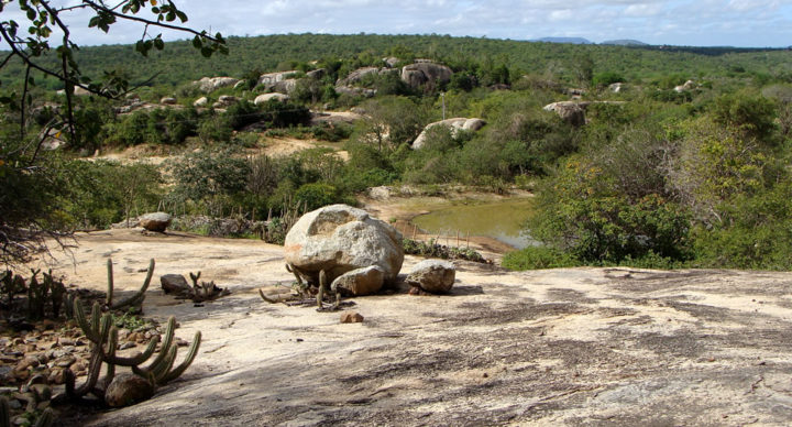 Caatinga - Vegetação