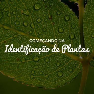 Começando na Identificação de Plantas