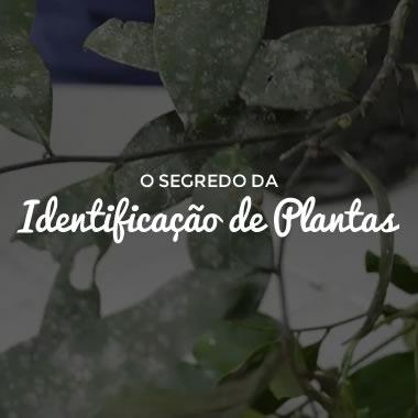 O Segredo da Identificação de Plantas