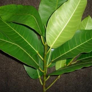 Logotipo do Grupo Dúvidas Gerais de Identificação de Plantas